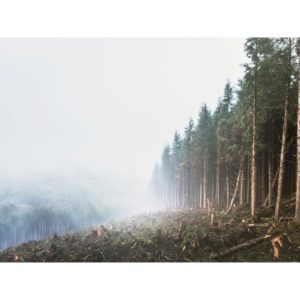 Forests Being Cut Down