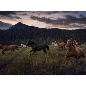 Wild Horses Runnin Through A Field In Front Of A Forest