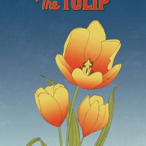 Orange Tulip Flower Illustration
